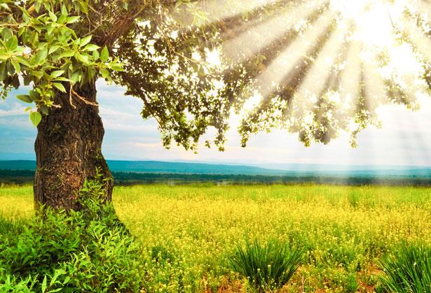 summer-day-1362416318qCN