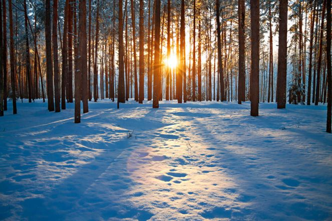 bare-trees-winter-landscaping